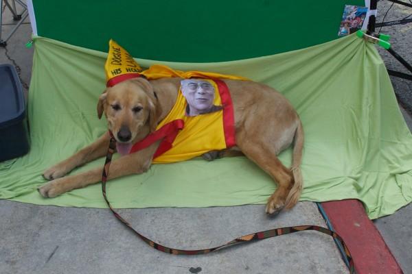 doggie-llama8FC5DBC5-3235-3147-B819-0684F83980DE.jpg